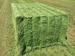 Top quality alfalfa hay