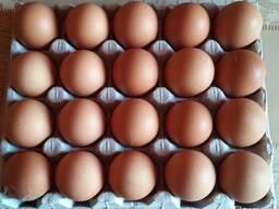 Яйца Куриные - фото 4